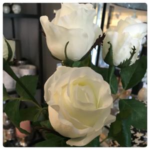 Bilde av Rose - hvit